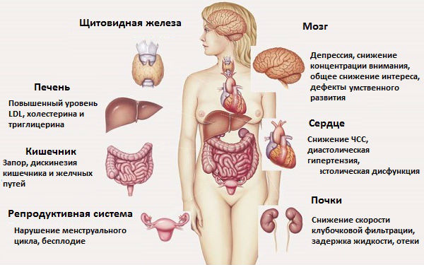 влияние гормонов щитовидки на сердце