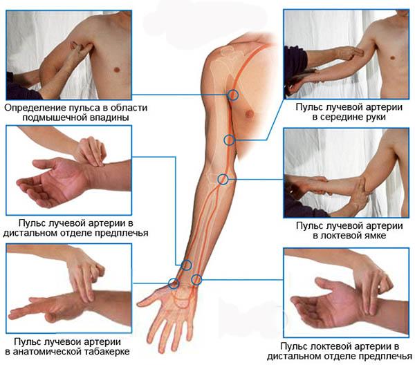 точки пальпирования артериального пульса