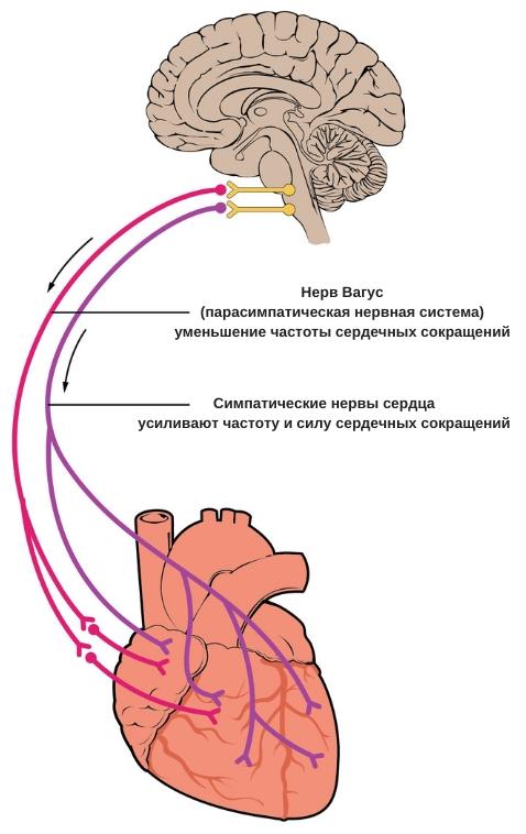 усиление пульса после еды