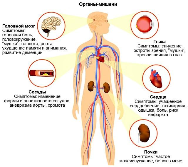 органы-мишени при высоком пульсе